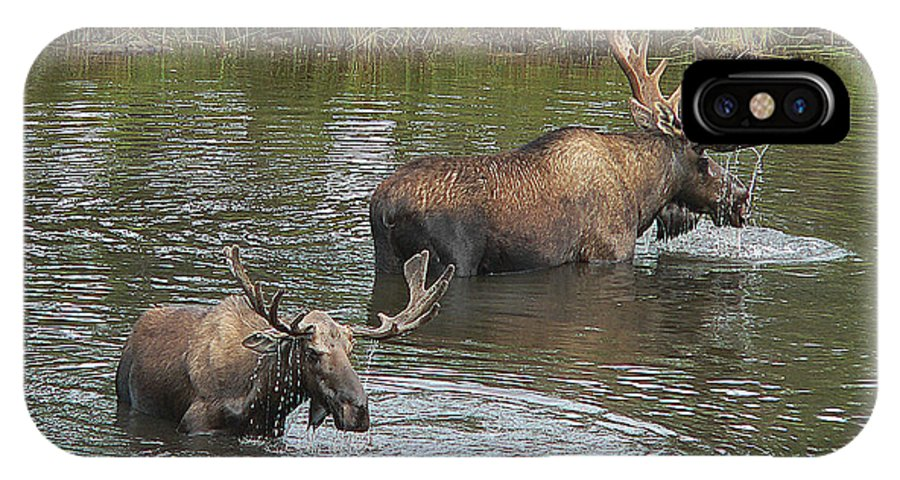 Nature IPhone X Case featuring the photograph Two Moose Feeding by Art Berggreen