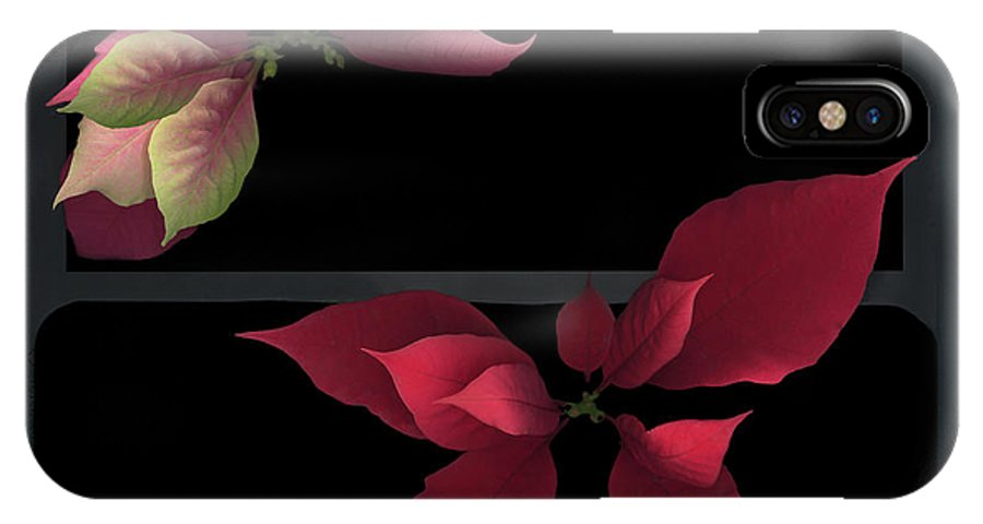 Two Poinsettias Black Gray Red Pink Green Flower Floral Flora Plant Petal Leaf Leaves Vein Stem Christmas Holy Holiday IPhone X Case featuring the photograph Two Poinsettias by Heather Kirk