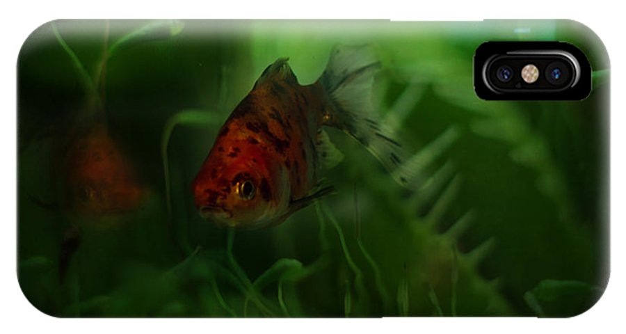 Goldfish IPhone X Case featuring the photograph Underwater World by Angel Ciesniarska