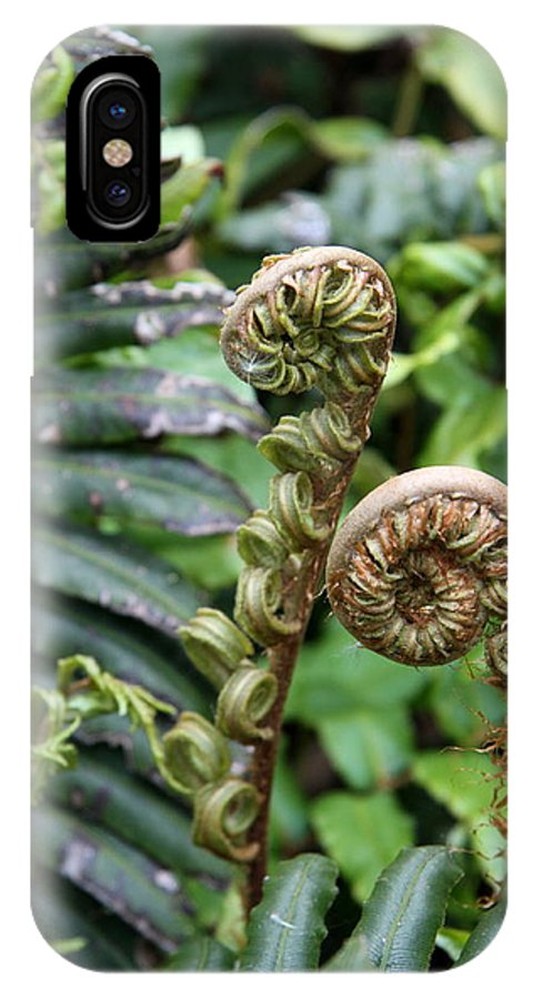 Fern IPhone X Case featuring the photograph Unfolding by Christiane Schulze Art And Photography