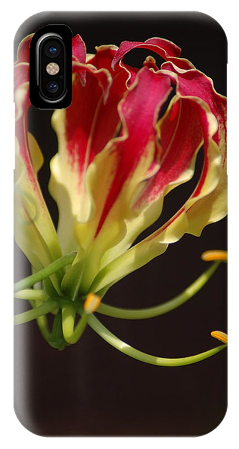 Flowers IPhone X Case featuring the photograph Unique by Donna Bentley