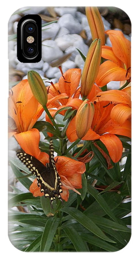 Flower IPhone Case featuring the photograph Untitled by Debbie May