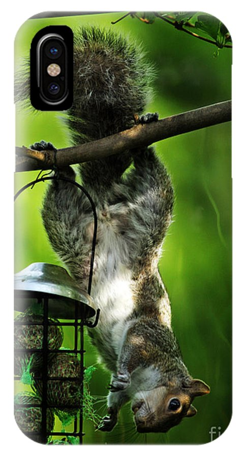 Squirrel IPhone X Case featuring the photograph Upside Down by Angel Ciesniarska