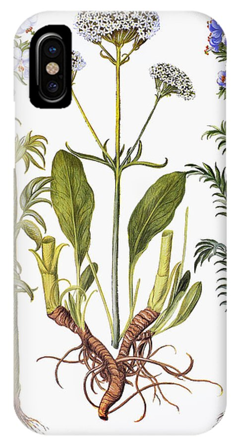 1613 IPhone X Case featuring the photograph Valerian Flowers, 1613 by Granger