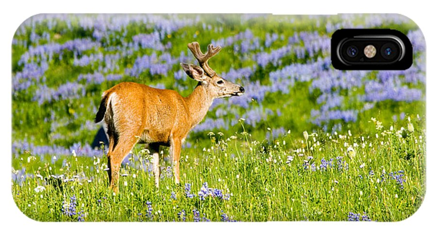 Deer IPhone X Case featuring the photograph Velvet On Lupine by Mike Dawson