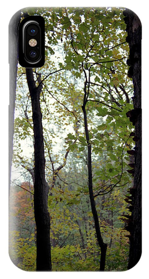 Tree IPhone Case featuring the photograph Vertical Limits by Randy Oberg