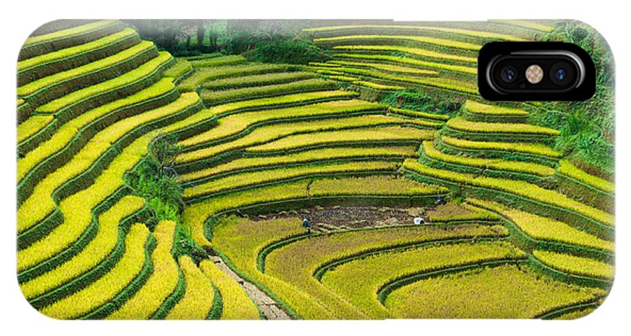 Rice Terraces In Harvest Time IPhone X Case featuring the photograph Vietnam Rice Terraces by Dong Bui