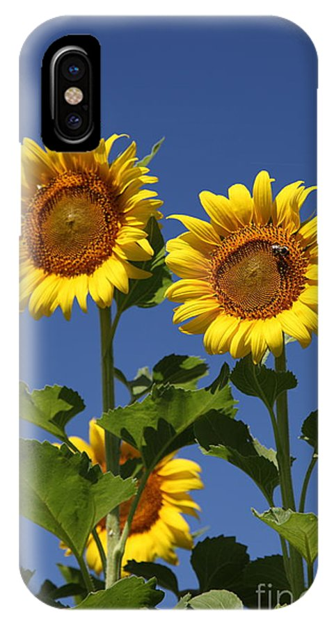 Sunflower IPhone X Case featuring the photograph Viewing The Past by Amanda Barcon