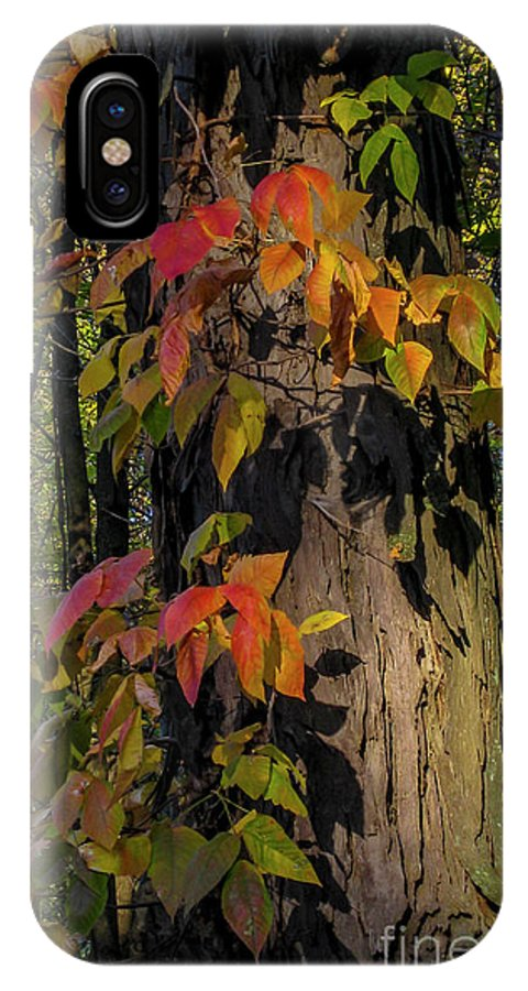 Ginger Woods IPhone X Case featuring the photograph Vine And Hickory by David Foote