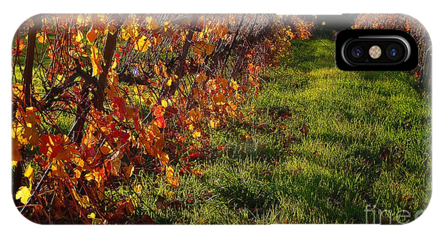 California Wine Country IPhone X Case featuring the photograph Vineyard 13 by Xueling Zou