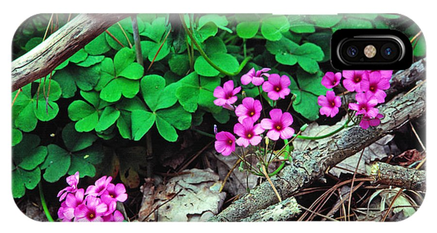 Violet Wood Sorrel IPhone X Case featuring the photograph Violet Wood Sorrel by Thomas R Fletcher