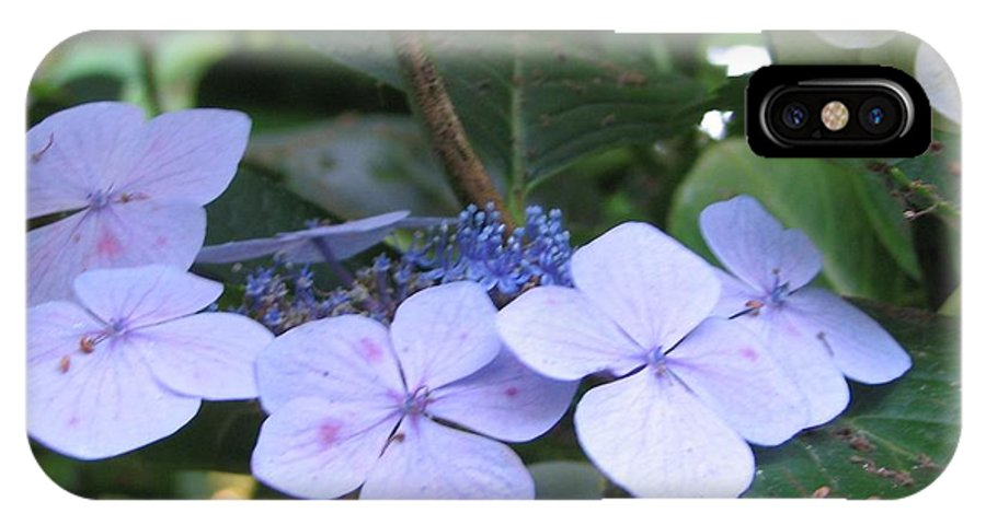 Violets IPhone X Case featuring the photograph Violets O The Green by Kelly Mezzapelle