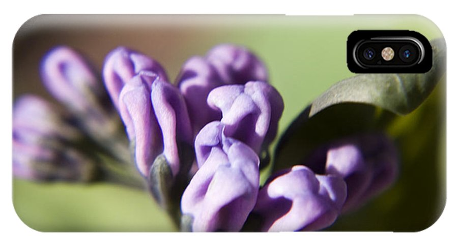 Virginia IPhone X Case featuring the photograph Virginia Bluebell Buds by Teresa Mucha