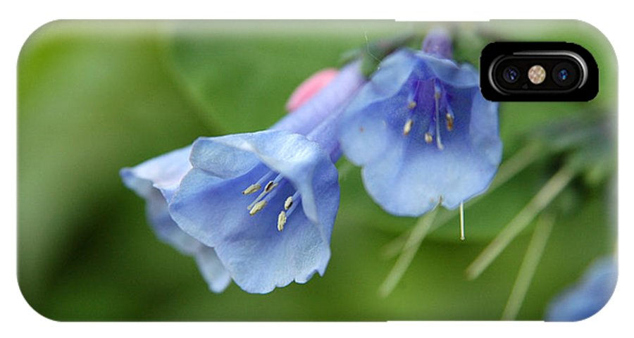 Bluebells IPhone X Case featuring the photograph Virginia Bluebells II by Kathy Schumann