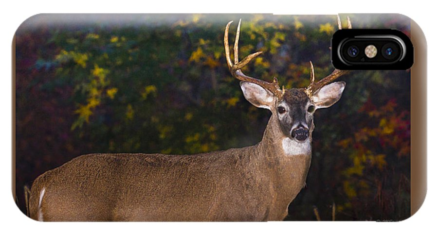 Fall Virginia White Tail Deer Buck IPhone X / XS Case featuring the photograph Virginian White Tail Buck by Mark Stephens