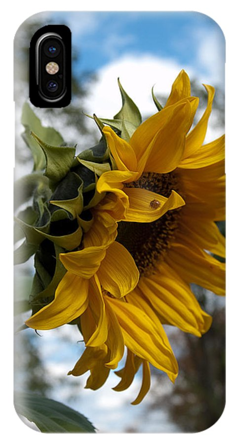 Sunflower IPhone X Case featuring the photograph Vt Sunshine by Sheila McDowell
