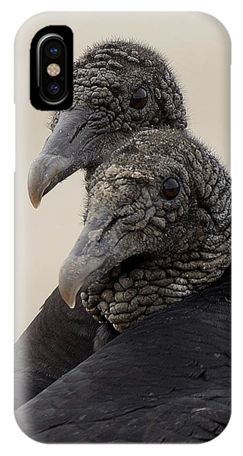 Vultures Wildlife IPhone X / XS Case featuring the photograph Vulture by Angel Trejo