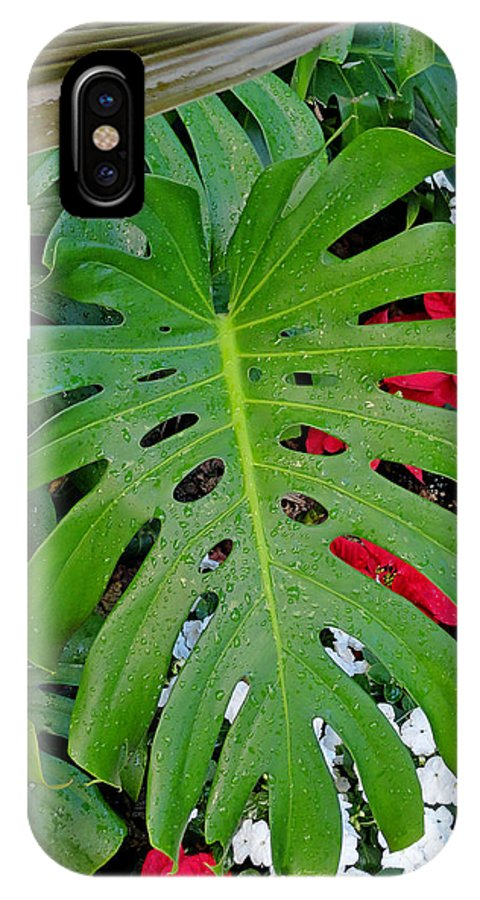 Waikiki IPhone X Case featuring the photograph Waikiki Split Leaf by Robert Meyers-Lussier