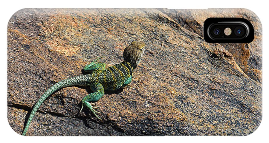 Lizard IPhone X / XS Case featuring the photograph Waiting For Bugs by Richard Greiner