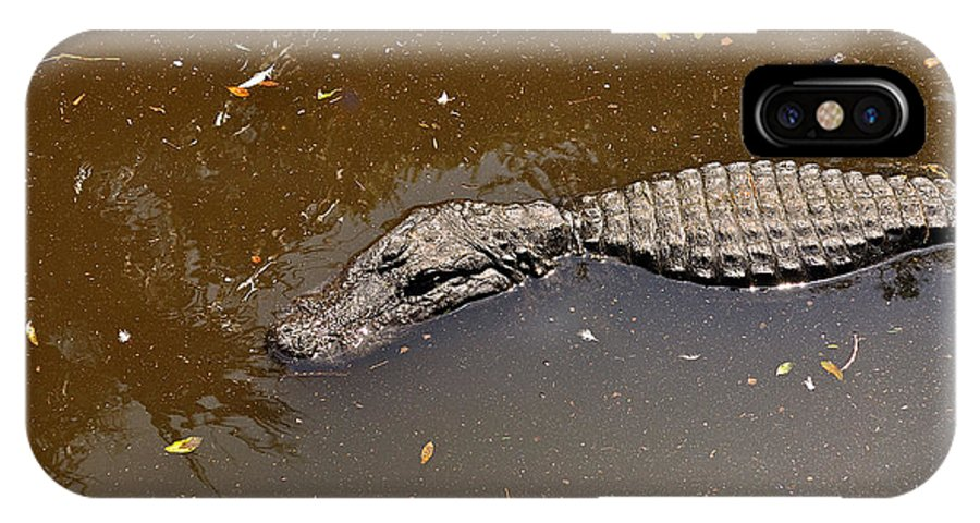 Alligator IPhone X Case featuring the photograph Waiting For Lunch by Kenneth Albin