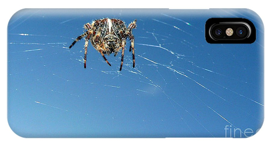 Spider IPhone Case featuring the photograph Waiting by Larry Keahey