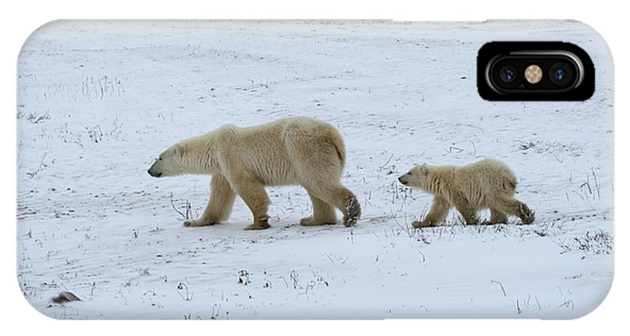 Polar Bear IPhone X / XS Case featuring the photograph Walk This Way by Connie Jeffcoat