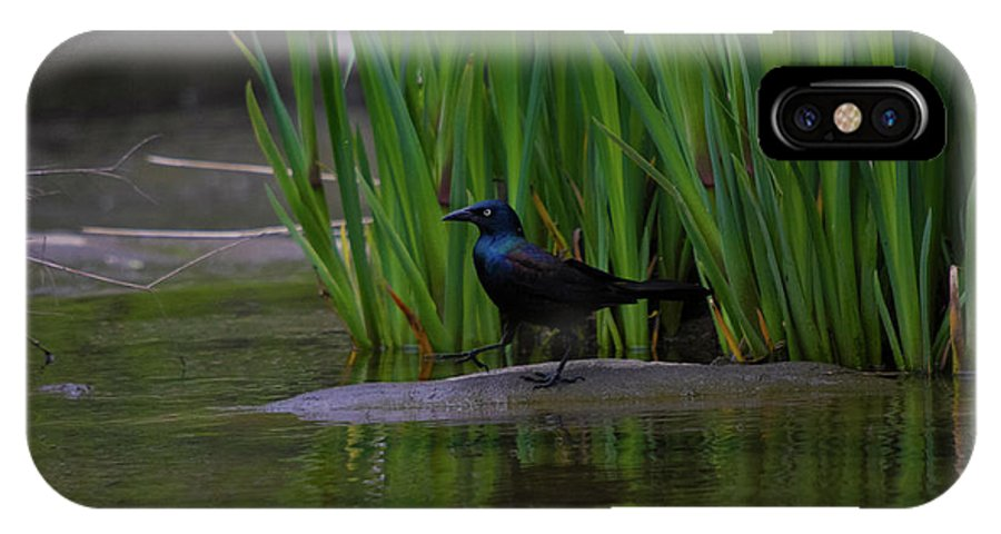 Black Bird IPhone X Case featuring the photograph Walk This Way by Donald Crosby