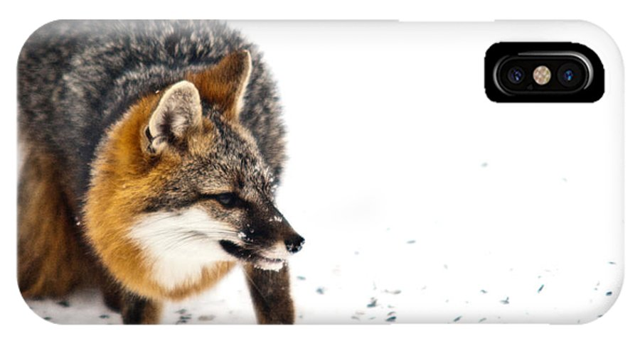 Red IPhone X Case featuring the photograph Wary Red Fox by Douglas Barnett