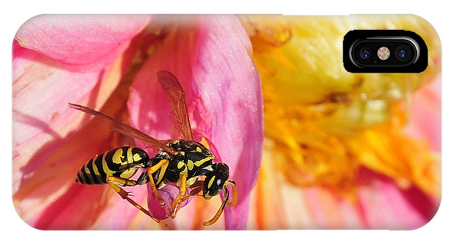 Wasp IPhone X Case featuring the photograph Wasp And Flower by David Arment