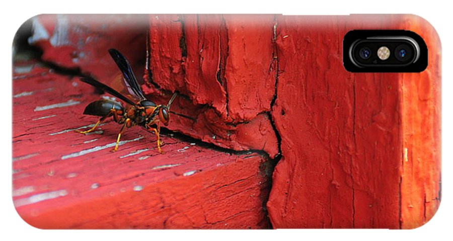 Wasp IPhone X Case featuring the photograph Wasp And Red by David Arment