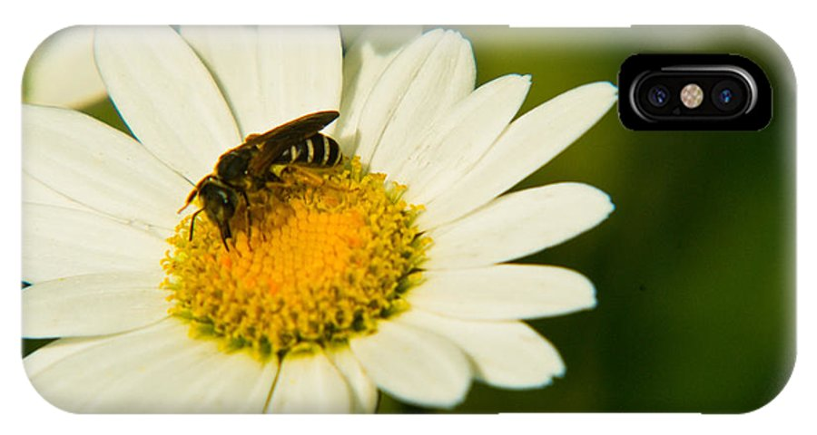 Wasp IPhone X Case featuring the photograph Wasp On Daisy by Douglas Barnett