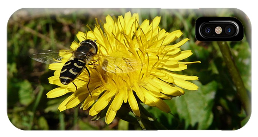 Wasp IPhone X Case featuring the photograph Wasp Visiting Dandelion by Valerie Ornstein