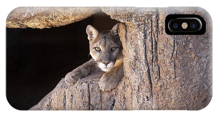 Cougar IPhone X Case featuring the photograph Watchful Eyes by Sandra Bronstein