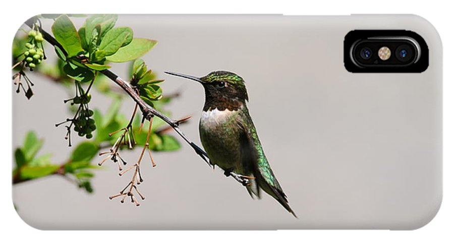 Hummingbird IPhone X Case featuring the photograph Watchful Male Hummer by Sandra Updyke