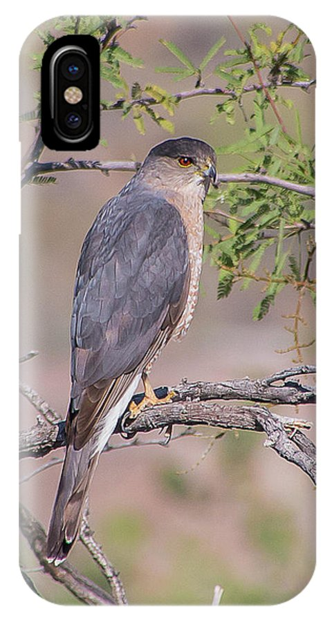 Coopers Hawk IPhone X Case featuring the photograph Watchfull by Kelly Lemen