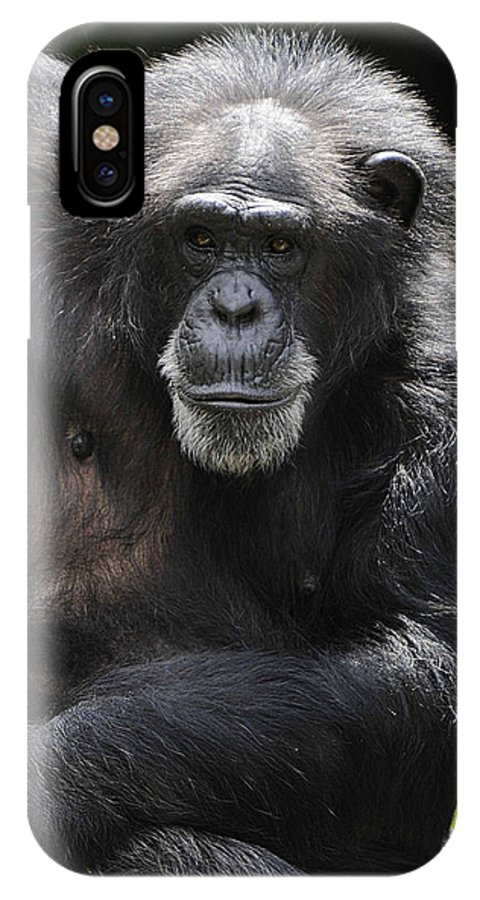 Chimp IPhone X Case featuring the photograph Watching by Keith Lovejoy