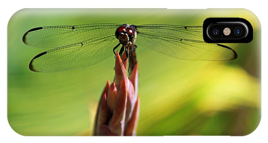 Dragonfly IPhone X Case featuring the photograph Watching You Watching Me by Suzanne Gaff