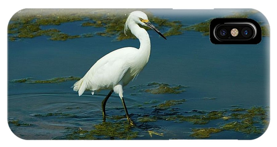 Water Bird IPhone X Case featuring the photograph Water Bird by Chris Anthony
