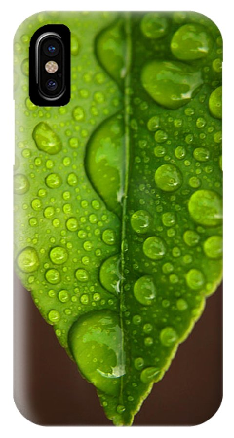 Leaf IPhone Case featuring the photograph Water Droplets On Lemon Leaf by Ralph A Ledergerber-Photography