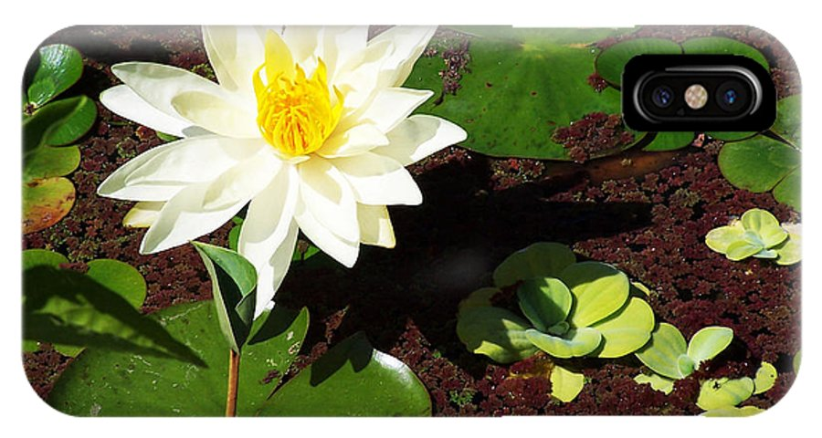 Water Lily IPhone X Case featuring the photograph Water Lily From Private Garden by Patricia Motley