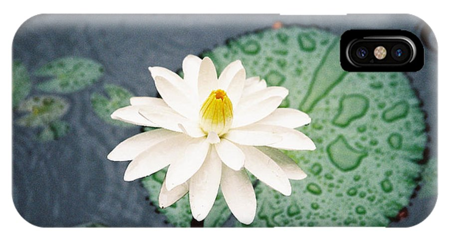 Flowers IPhone X Case featuring the photograph Water Lily by Kathy McClure