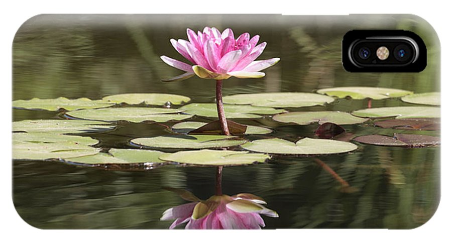 Lily IPhone X Case featuring the photograph Water Lily by Phil Crean
