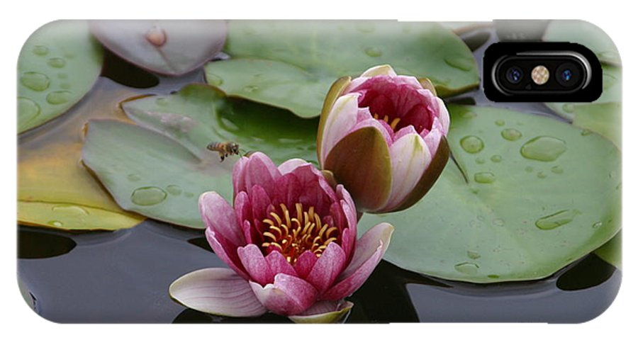 Nature IPhone X Case featuring the photograph Water Lily With Bee by Janice Keener