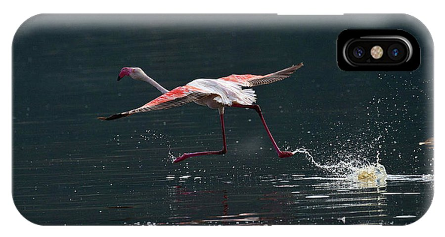Flamingo IPhone X Case featuring the photograph Water Splash by Janet Chung