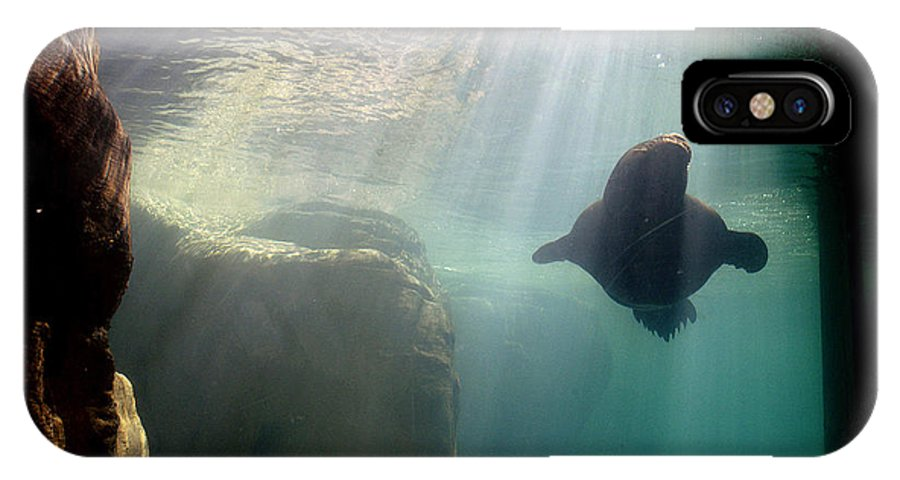 Memphis Zoo IPhone X Case featuring the photograph Water World by D'Arcy Evans