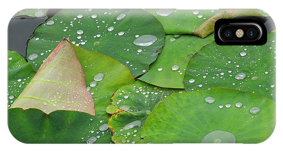 Water Lilies IPhone Case featuring the photograph Waterdrops On Lotus Leaves by Silke Magino