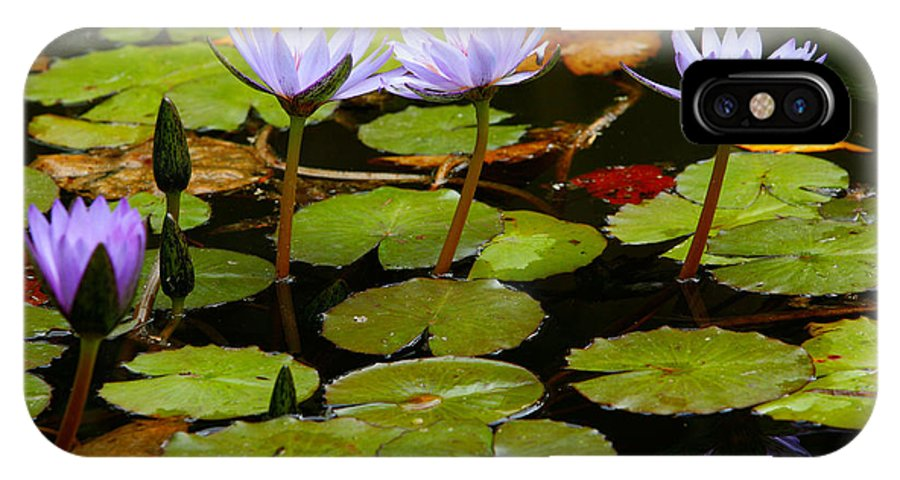 Pond IPhone Case featuring the photograph Waterlilies by Gaspar Avila