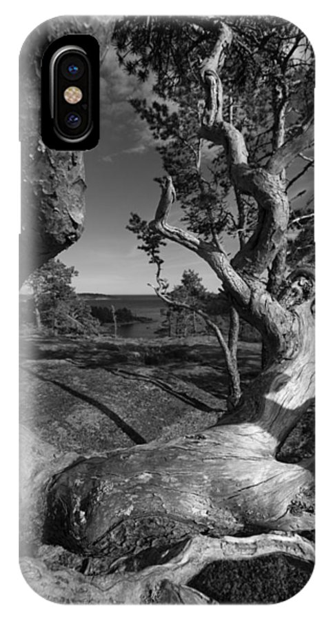 Baltic Sea IPhone X Case featuring the photograph Weather Beaten Pine Tree And Ocean Bay - Monochrome by Ulrich Kunst And Bettina Scheidulin