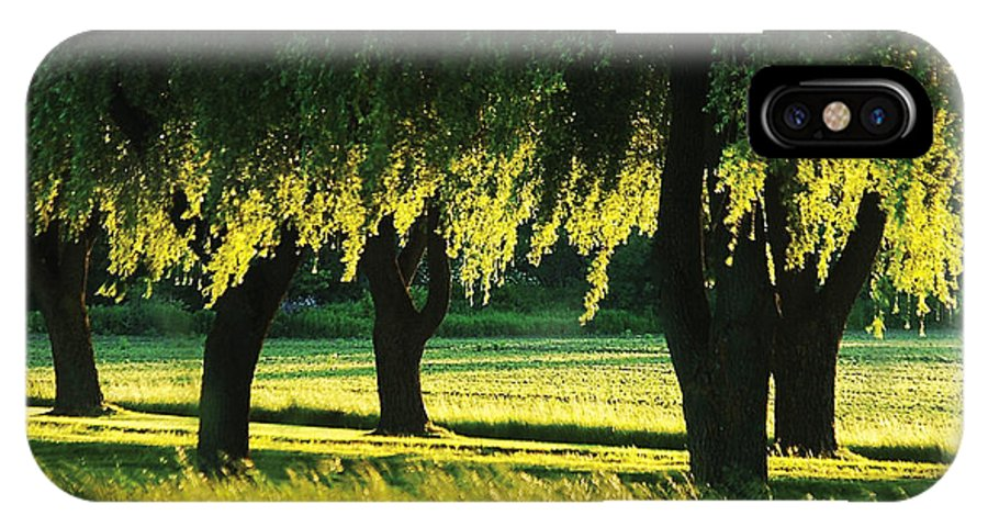 Willow IPhone Case featuring the photograph Weeping Willows by Steve Somerville