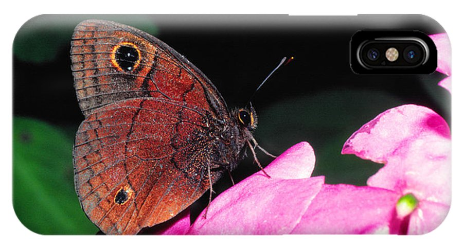 West Indian Buckeye IPhone X Case featuring the photograph West Indian Buckeye by Thomas R Fletcher